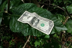 Poison Ivy Compared to a Dollar Bill